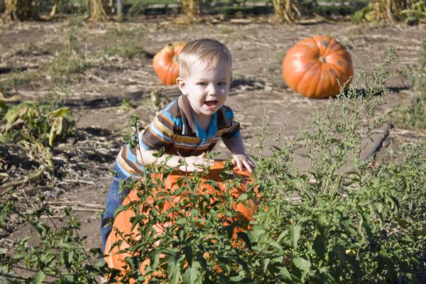 charlie in pumpkin patch
